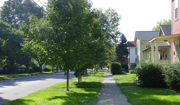 street tree inventory
