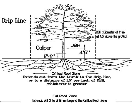 Tree Diagram for Protection