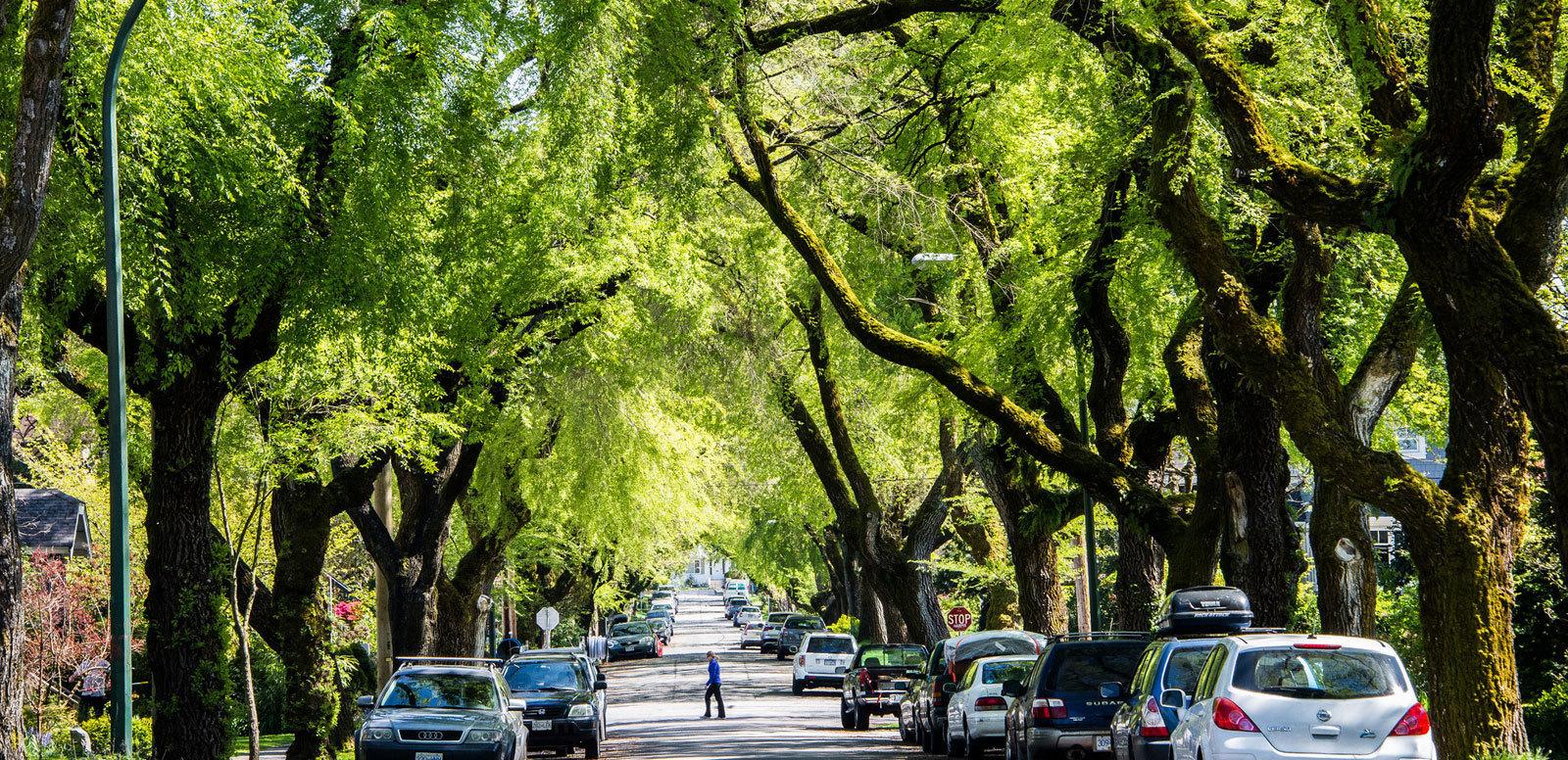 North Carolina Urban Forest Council Trees