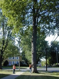 Street Tree Inventories