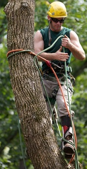Interested in a Career in Arboriculture?